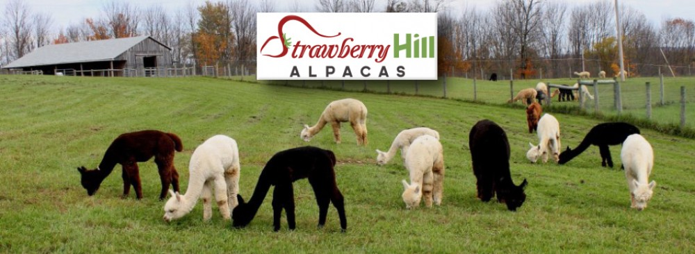 Strawberry Hill Alpacas LLC